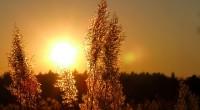 efecte solare