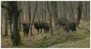 Parcul Natural Vanatori-Neamt